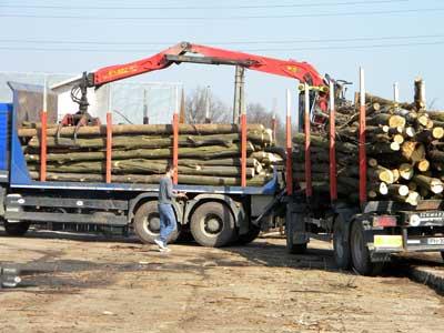 transport_lemne
