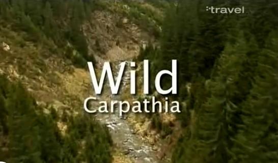 whild_carpathia_documentar