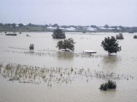 ploi agricultura distrugeri