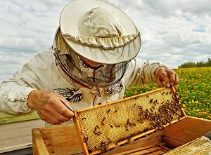 BeekeeperInSuit