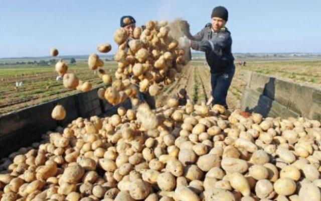 revolutia-cartofilor-imposibil-de-realizat-in-tara-noastra-767