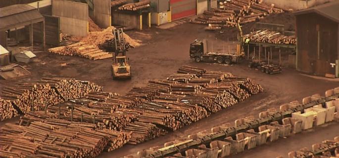 Defrişări-ilegale-Holzindustrie-Schweighofer
