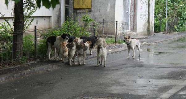 image-2011-05-13-8622029-56-caini-agresivi-nesterilizati