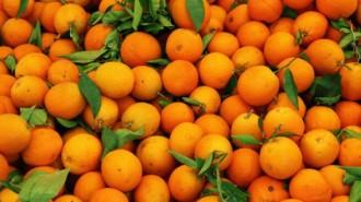 portocale_multe_655x360_03670100