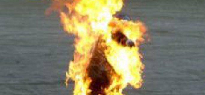 om-foc