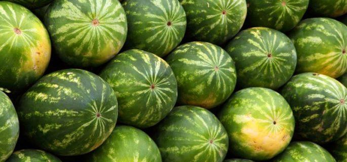 cultivare-pepeni-e1424737818265
