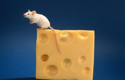 Mouse sitting on top of cheese