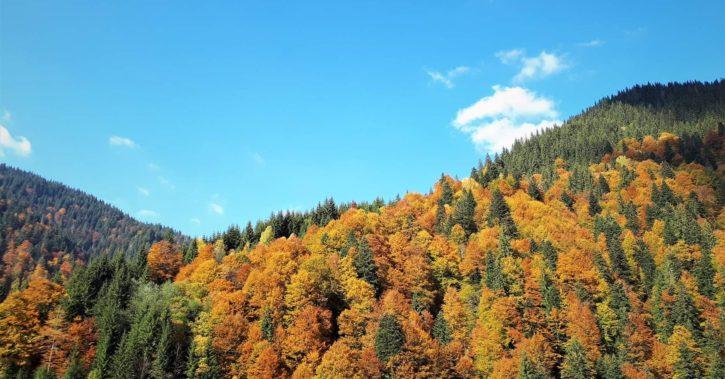 Direcția Silvică Vâlcea  administrează, prin intermediul celor 9 ocoale silvice, 93.705 hectare păduri de stat