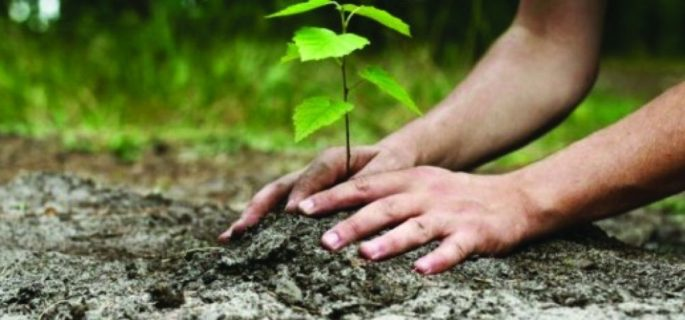 Luna-Plantarii-Arborilor