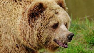 Alerta-in-Valcea-dupa-ce-a-fost-vazut-un-urs-in-zona-Manastirii-Turnu