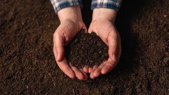 Soil fertility analysis as agricultural activity, female farmer holding arable ploughed dirt in cupped hands