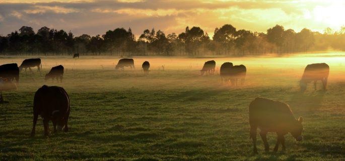 Iluminarea ampla te poate ajuta in mentinerea fermei in siguranta. Afla cum!